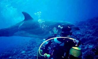 La vidéo du jour #01/02/13:Un dauphin demande de l'aide à un plongeur!