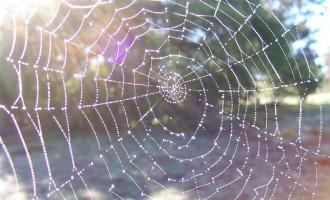 La Vidéo du Jour #13/02/13:Une pluie d'araignées!