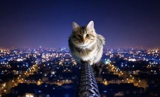 Où votre chat gambade-t-il la nuit?Un tracker GPS vous donne la réponse!