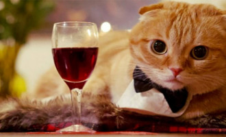 Partager un verre de vin avec son chat?C'est possible!