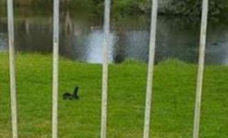 Que voyez-vous sur cette photo?Non, ce n'est pas un canard et c'est bien plus cocasse