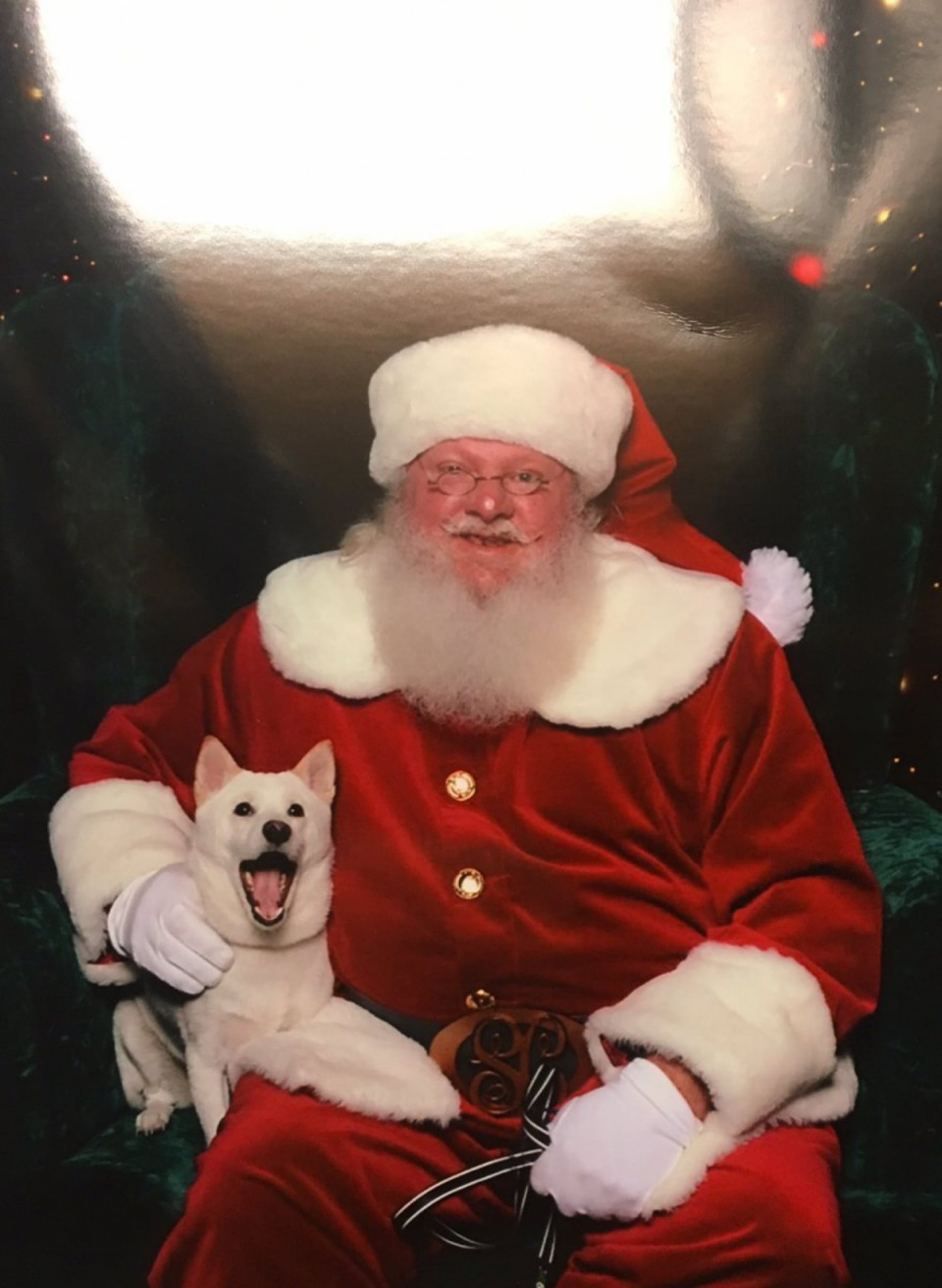 Chien Père Noël 6