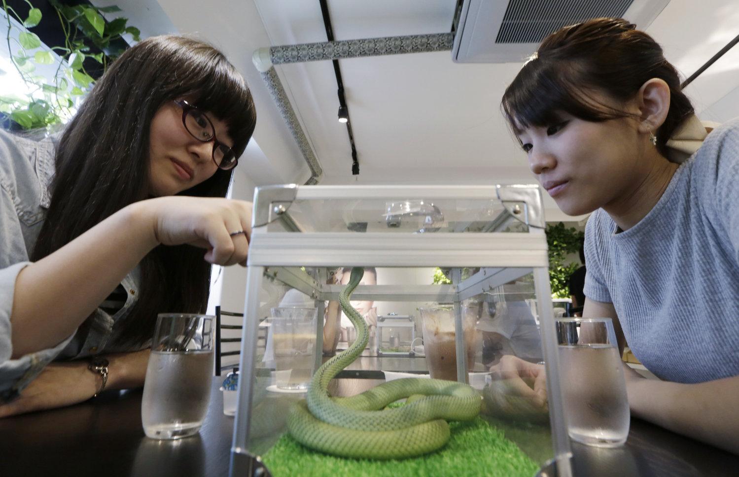 Japon : Découvrez le bar à serpent !
