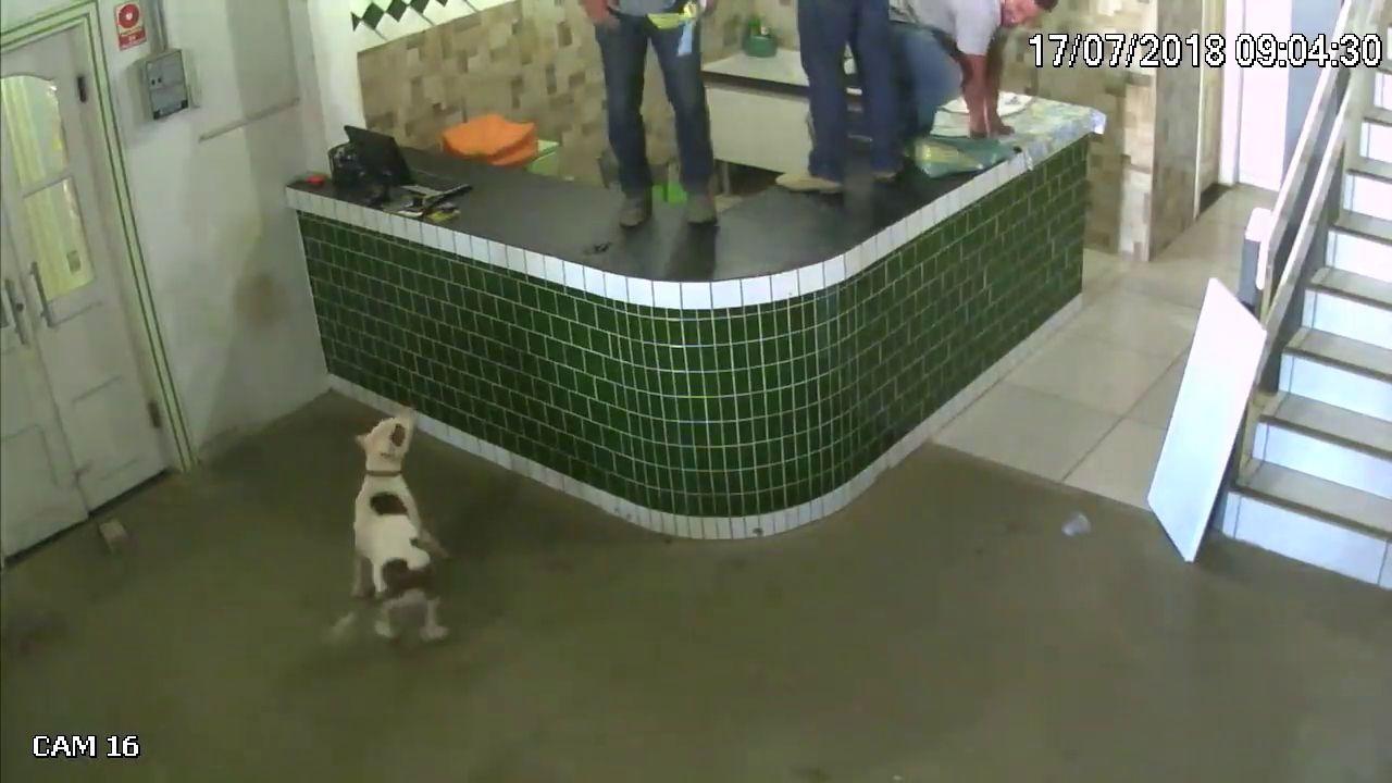 ouvriers-vs-gentil-pitbull