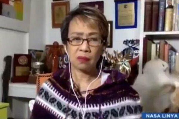 Télétravail : Les chats de cette journaliste se bagarrent derrière elle… en plein direct !